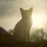 Animals Too Have A Soul – Spiritual Address by Anita Panayiotis