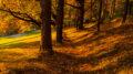 5 Spiritual Hygge Activities for Autumn